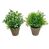 SHACOS Paquete de 2 Plantas Artificiales Grandes Plásticas Flor Decorativa en Maceta para Oficina Verde 2Pcs