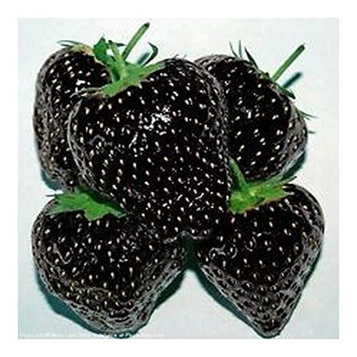 Erdbeeren schwarz - 50 Samen