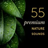 Forest Streams: High Definition, Top Quality Nature Sounds for Sound Therapy