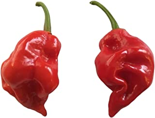 Naga Viper Pepper 20 Seed - an Unstable Extreme Heat Rare Hot Peppers, A Threeway Hybrid of Super Hot Chillies, World Record for The 2011 Hottest Chili
