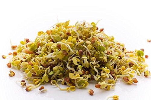 Graines germées - radis - 100 g - 8500 graines