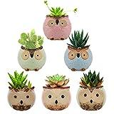 Lewondr 6PZS Macetas Decorativas para Flores y Plantas, 6 cm Alta Juego de Tiestos Pequeños de Forma Búho de Cerámica con Drenaje para Suculentas Cactus para Mesa Jardín Oficina, Kit 3