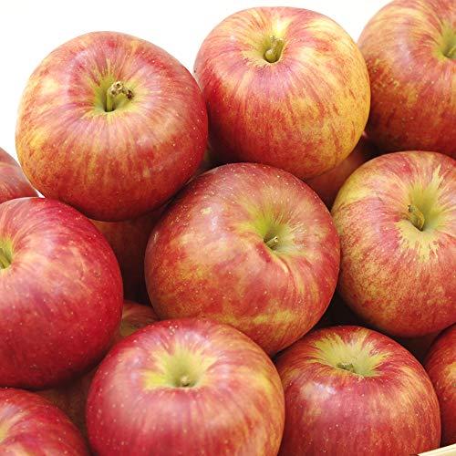 国華園 食品 りんご 青森産 家庭用サンつがる 10kg 1箱