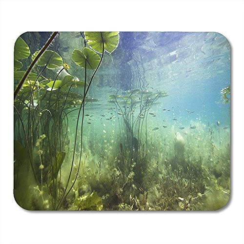 Mouse Pads Beautiful Yellow Water Lily Nuphar Lutea in The Clear Pound Underwater Shot Lake Nature Habitat Mouse pad 25 X 30 CM Mouse Mats