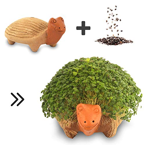 Growing Fiesta Anzuchtset Schildkröte für Chia-Samen, Kresse, Keimsprossen (handgemachte Tonfigur, getöpfert) 14320
