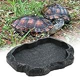 Sheens Alimentador de Reptiles, Resina de Roca Reptil Alimento y Agua Recipiente de alimentación Terrario para Mascotas Plato de Plato para Tortuga Lagarto Iguana de camaleón(M-Verde)