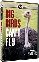 Nature: Big Birds Can't Fly [DVD] [Import]