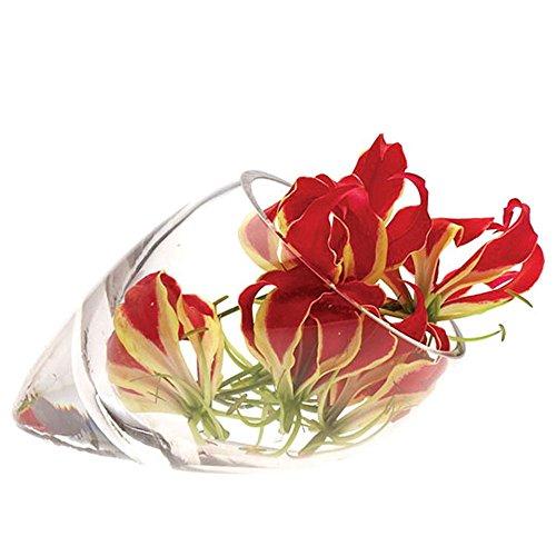 Chive - Jarron de cristal con forma de cono, diseno elegante de cornucopia de perfil bajo, Transparente, 20cm x 12cm x 12cm