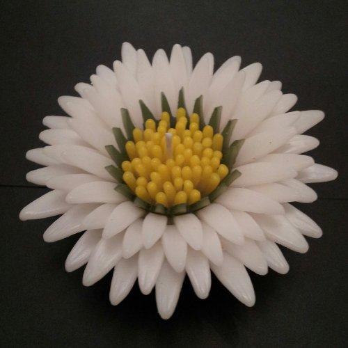 WASIWAX perfumada vela flotante de Daisy Love–L