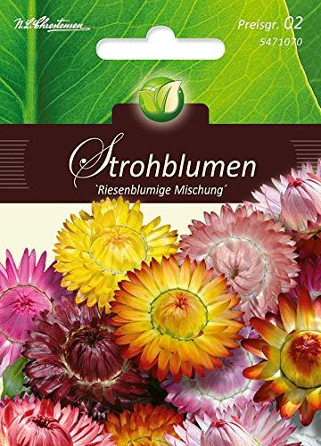 Helichrysum, Strohblumen, Riesenbl. Mg.