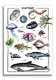 Poster IM WATTENMEER illustriert von Linda Kowsky -