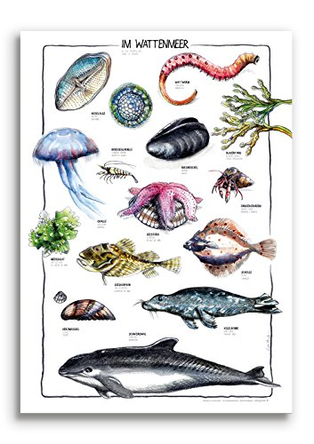 Poster IM WATTENMEER illustriert von Linda Kowsky - Recyclingpapier 50 X 70 cm