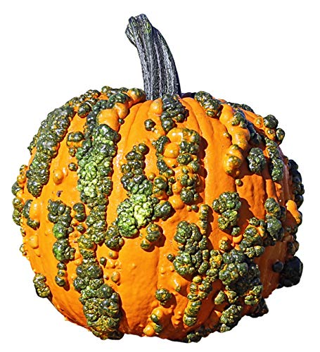Pumpkin Warty Goblin - Vegetable Seeds