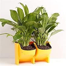 Aalborg125 Stackable 2-Pockets Vertical Wall Planter Self Watering Hanging Garden Flower Pot Planter for Indoor/Outdoor