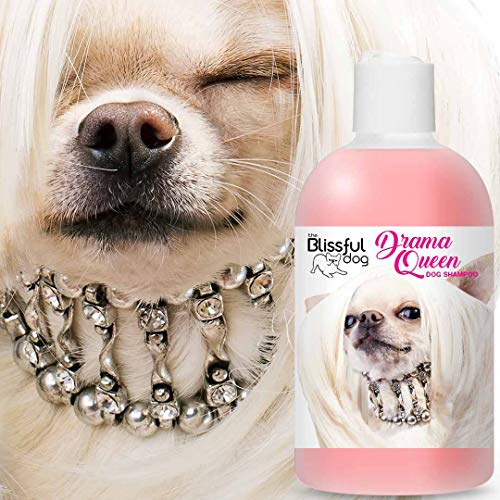 The Blissful Chihuahua Drama Queen Dog Shampoo, 16 oz.
