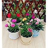 ホームガーデンフォーシーズンズは18を植えるためのM愛の花100のカーネーションの種多年生の花の種レア鉢植え