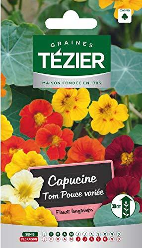 Tezier - Capucine naine Tom Pouce variée - Fleurs annuelles