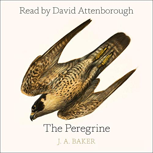 The Peregrine audiobook cover art