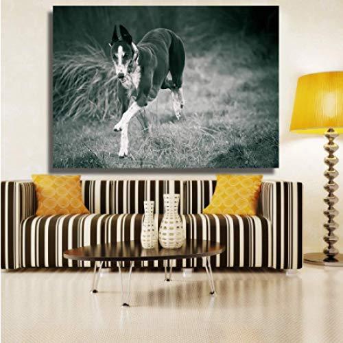 FGVB Pintura de Animal Corriendo Galgo Blanco y Negro sobre Lienzo Cuadro de Pintura de Pared para Sala de Estar -50x70cmx1pcs -Sin Marco