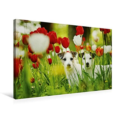 CALVENDO Premium Textil-Leinwand 75 cm x 50 cm quer, Terriermädchen   Wandbild, Bild auf Keilrahmen, Fertigbild auf echter Leinwand, Leinwanddruck: .in Monstertulpen Tiere Tiere