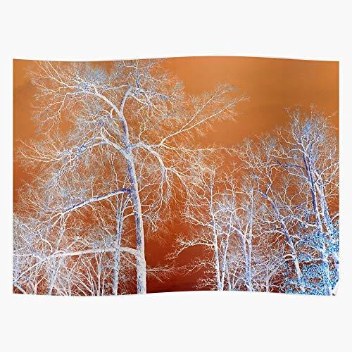 dressbarn Trees Inversion Products Gimp Most Das eindrucksvollste und stilvollste Poster für Innendekoration, das derzeit erhältlich ist