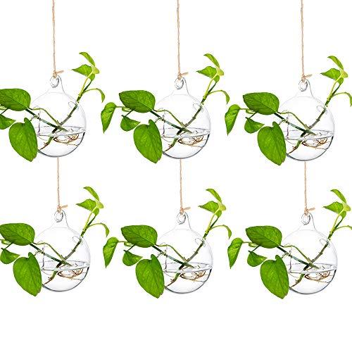 Glasseam Jardineras Colgantes De Vidrio Contenedores De Plantas De Agua Terrario Interior Al Aire Libre para El Jardín del Hogar Balcón, 6 Piezas