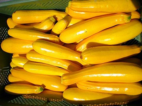 Reinsaat Zu25 Zucchini Gold Rush (Bio-Zucchinisamen)