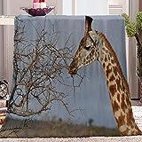 WJYMJJ Flanell Kuscheldecke Giraffe hochwertige Wohndecke, super weiche Fleecedecke als Sofaüberwurf, Tagesdecke oder Wohnzimmerdecke 70x100 cm
