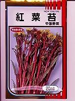 紅菜苔 サカタのコウサイタイ種です