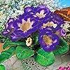Fash Lady 9 Farben Gloxinia Samen Sinningia Gloxinia Blumensamen Hause Bonsai Diy Für Garten Zierpflanze Kostenloser Versand 100 STÜCKE 17 #2
