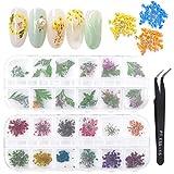 Dokpav 2 Boîtes de Fleurs Séchées pour Nail Art, 24 pièces Fleurs Séchées Feuilles Vertes Ensemble Nail Applique 3D Nail Art Accessoires pour Décoration d'Ongles, avec Pince à épiler incurvée