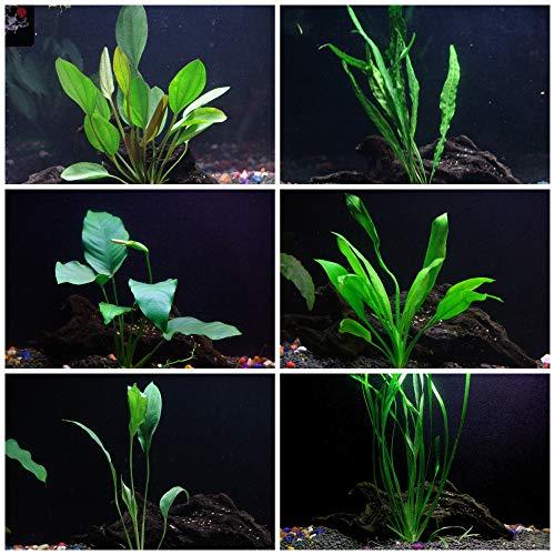 Cichlid Live Aquarium Plants Bundle