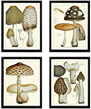 Mushroom Print Set of 4 Antique Botanical Beautiful Edible and Poisonous Brown Beige Natural Mushrooms French Truffle Fore...