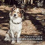 AniForte B.A.R.F. Line No1 Gemüse-Kräuter Vielfalt 5 kg glutenfrei- Naturprodukt für Hunde - 2
