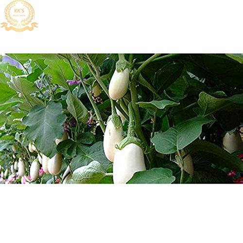 Blanc FAT Aubergine F1 Seeds, 200 graines / Pack, à haut rendement, la résistance aux maladies KK178