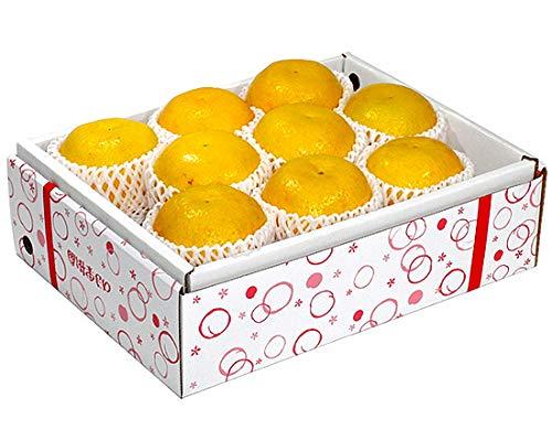 河内晩柑(ジューシーオレンジ) 贈答用 約3kg