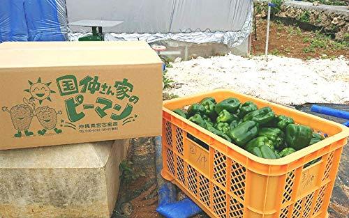 ☆おかげさまで20周年☆ 宮古島産 ピーマン (ちぐさ) 10kg (B品)