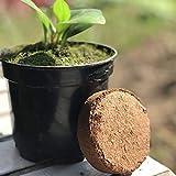 LACKINGONE - 6 unidades de pastillas de coco de suelo de cultivo orgánico...