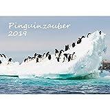 Pinguinzauber · DIN A3 · Premium Kalender 2019 · Pinguine · Meer · Tauchen · Ozean · Natur · Tiere · Edition Seelenzauber