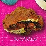 カプセルQミュージアム 財布にカエル お財布蛙 [2.ニホンヒキガエル](単品)