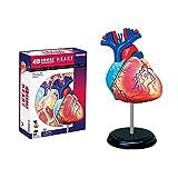 4D Juguete Puzzle Juegos, Corazón De Órganos Humanos Modelo Anatómico, Kid...