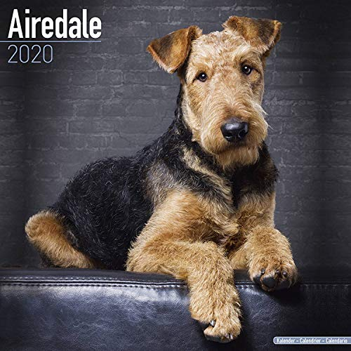 hgfyef Airedale Terrier Dog Breed Pet Quilt A Quilt Wholecloth Cheater Quilt Dog Hand Towels Dishcloth Floral Linen Hand Towels Super Soft Extra Absorbent for Bath,Spa And Gym 27.5 inch X17.5 inch
