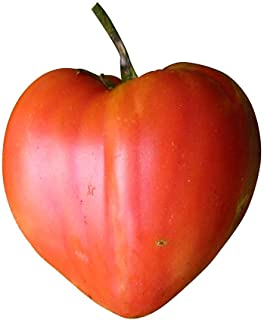 Ox Heart Red Tomato 10 Seeds -by Samenchilishop