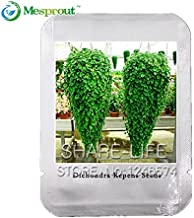 Dichondra Repens Lawn Seeds Hanging Decorative Garden Plants Bonsai Easily Potted 100% True Seed 100 pcs/bag