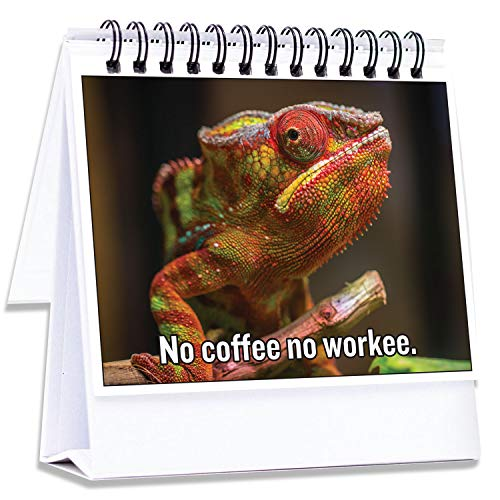 Funny Office Gifts for Coworkers | Hilarious Cubicle Accessories Tell Everyone How You are Feeling |...