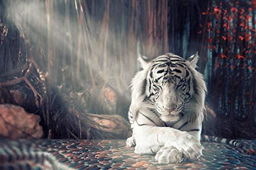 Puzzle Foto 1000 Piezas Tigres Patas Blancas 50x70cm