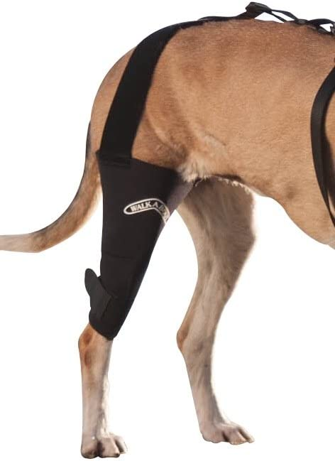 Canine Knee Brace :3.0 Free Shipping Cheap Bargain High order Gift mm support neoprene sleeve