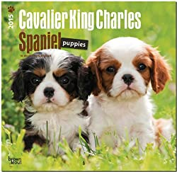 Cavalier King Charles Spaniel Puppies 2015 Calendar (英語) カレンダー[Browntrout Publishers/Amazon]
