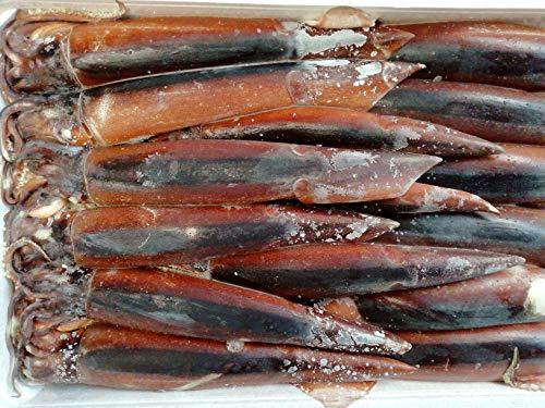 産直丸魚 北三陸産 釣り物 スルメイカ 生食用 15尾入   真いか するめいか イカ いか