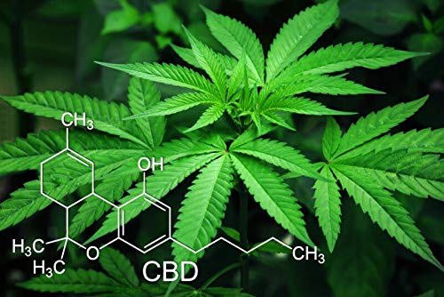 Cannabis Plant - Chemical Compound CBD Marijuana Plant Nature Poster 29.7x42cm (A3)